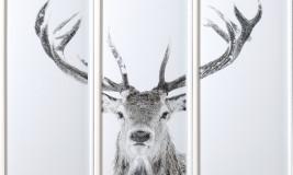 stag head photo winter